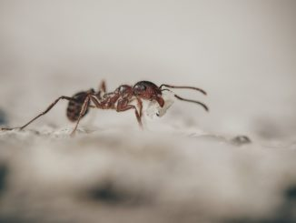Ameisen in Haus und Wohnung